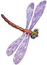 картинки для детей стрекоза